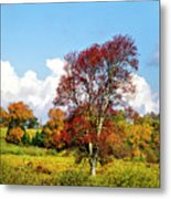 Fall Trees In Country Field Metal Print