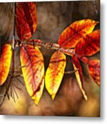 Fall Trees Number One Metal Print