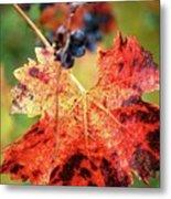 Fall Vine Metal Print