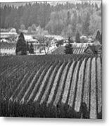 Vineyard In Black And White Metal Print