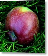 Fallen Apple Metal Print