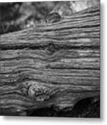 Fallen Black And White Trees And Lines In Nature Metal Print