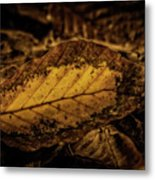 Fallen Color Metal Print