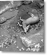 Fallen Deer Metal Print