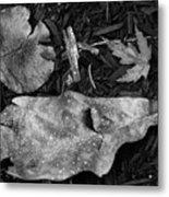 Fallen Leaves Revisited Metal Print