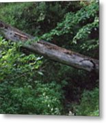 Fallen Log Metal Print