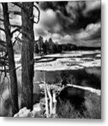 Fallen Trees In The Moose River Metal Print