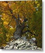 Falling Tree Metal Print