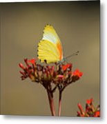 False Dotted Border Butterfly Metal Print