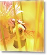 Fame Is A Bee Metal Print