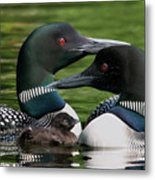 Family - Famille Metal Print by Michel Legare