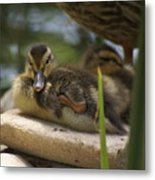 Family In The Park Metal Print