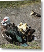 Family Loner Metal Print