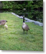 Family Of Geese Metal Print