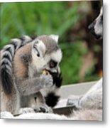 Family Of Lemurs Metal Print
