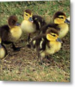 Family Portrait Metal Print by Angelina Vick