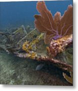 Fan Coral On Elbow Reef In Key Largo Metal Print