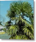 Fan Palm Tree Metal Print