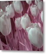 Fanciful Tulips In Pink Metal Print