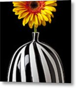 Fancy Daisy In Stripped Vase  Metal Print