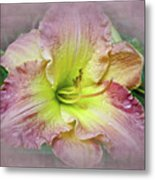 Fancy Daylily In Pink And Yellow Metal Print
