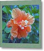 Fancy Peach Hibiscus Metal Print