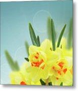 Fancy Spring Narcissus Garden  Metal Print