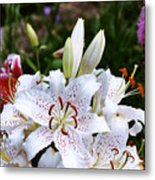 Fancy White Lily In Garden Metal Print