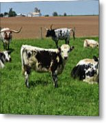 Fantastic Farm On A Spring Day With Cows Metal Print