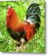 Farm - Chicken - The Rooster Metal Print