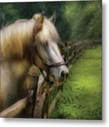 Farm - Horse - White Stallion Metal Print