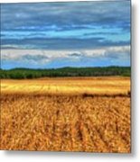 Golden Field Farm Li.ny Metal Print