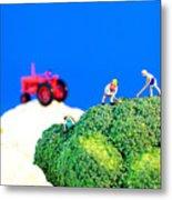 Farming On Broccoli And Cauliflower II Metal Print
