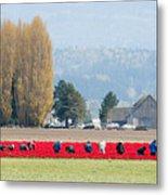 Farming Tulips L574 Metal Print