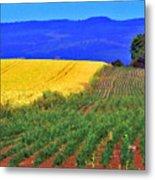 Farmlands Of The Willamette Valley Metal Print