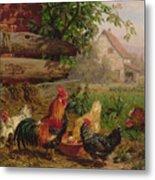 Farmyard Chickens Metal Print