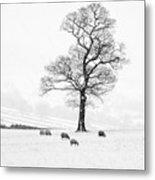 Farndale Winter Metal Print
