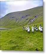 Faroes Geese Metal Print