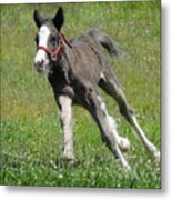 Faster Than The Wind Metal Print