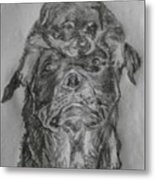 Father And Puppy  Metal Print