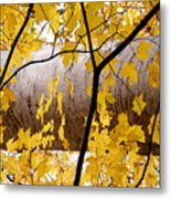 Father Nature Metal Print