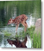 Fawn At The Water Hole Metal Print