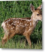 Fawn In The Open Metal Print