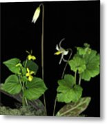 Fawn Lily Metal Print