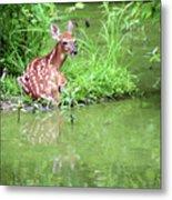 Fawn White Tailed Deer Wildlife Metal Print