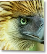 Fearless Philippine Eagle Metal Print