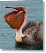 Feasting Brown Pelican  Metal Print