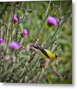 Feasting In The Flowers Metal Print