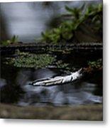 Floating On A Still Pond Metal Print