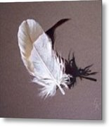 Feather And Shadow 1 Metal Print